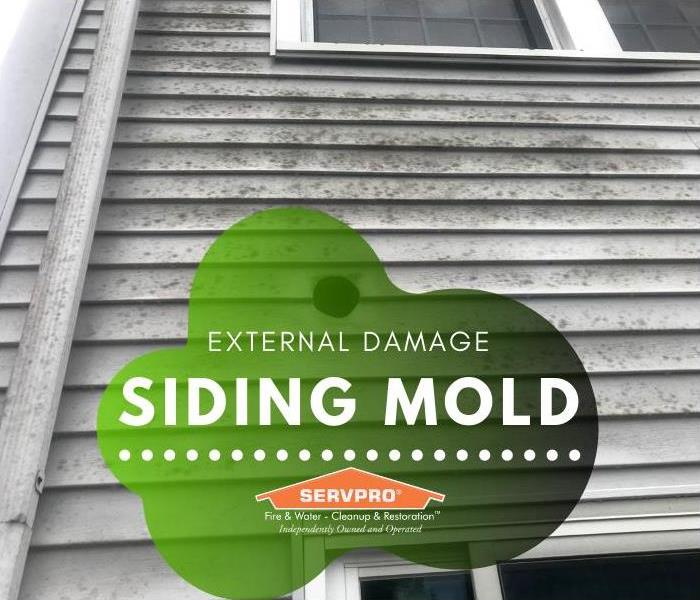 There is a light layer of mold growing on the white siding of a house.