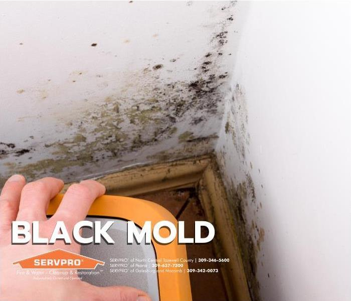 Title Card - Mold in the corner of a house.